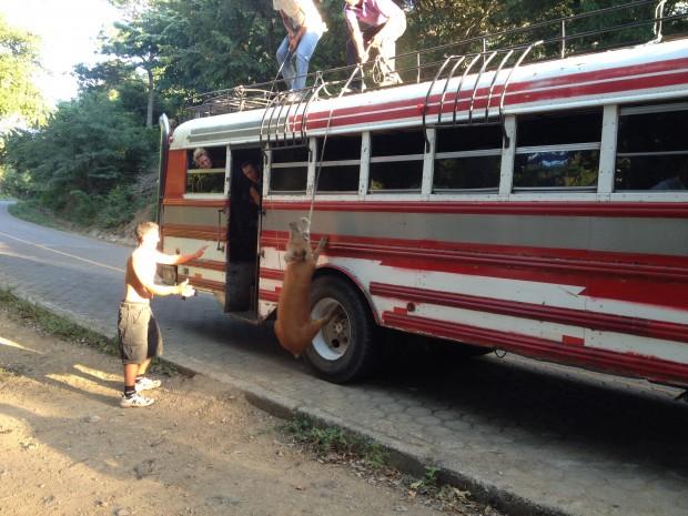Der Stinker will nicht auf den Bus!