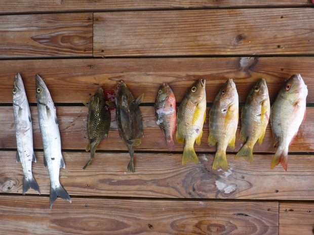 Baby bara,2x chicken fish,?,3x black snapper,red snapper