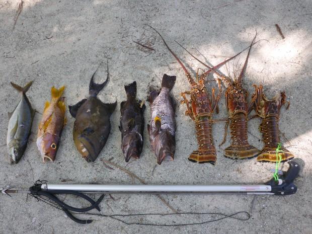 Sp. Makrelle,red snapper,trigger,2x Grouper,3x Hummer