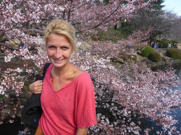 Kirschbaumblueten saison