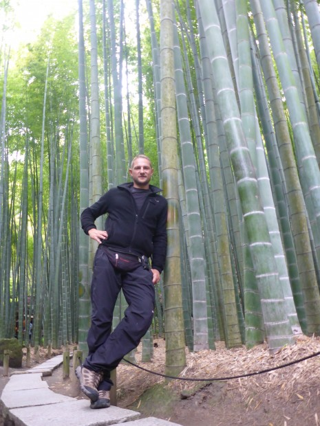 Riesenbambus wird ca 30m hoch