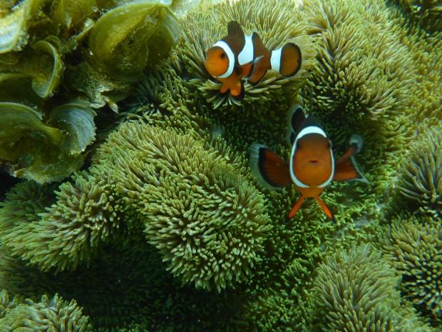 Und hier wohnt auch Nemo
